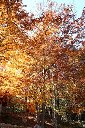 太陽の光が木のカラフルな葉の間でフィルタ リングある驚くべきの秋の風景