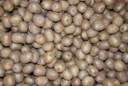 background of hundreds of ripe kiwis ready for export in the Nordic countries Stock Photo