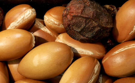 many ripe argan seeds for the production of beauty creams