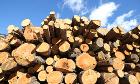 logs cut by the woodcutter forming a huge stack of wood