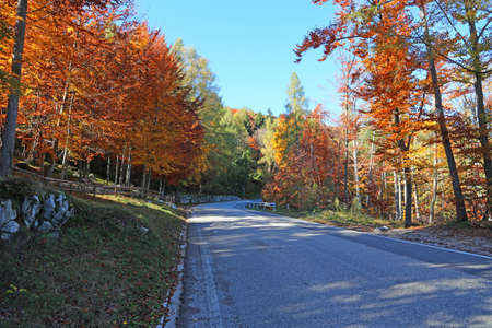 mountain road among the autumn trees with the dried yellow and red leaves