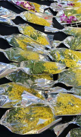 yellow mimosa for all women for sale at stand of market