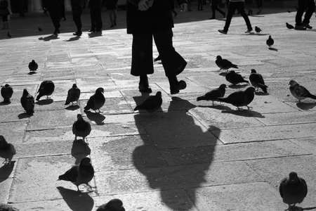 pigeons and people in Saint Mark square in Venice Italy with black and white effect