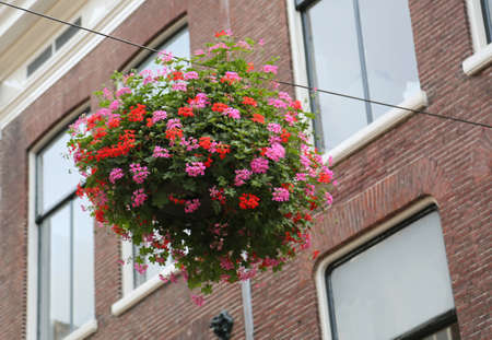 vase of pink and red geraniums hanging by a thread over a road in the city of Haarlem in the Netherlands