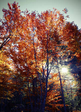 colorful deciduous tree leaves in autumn