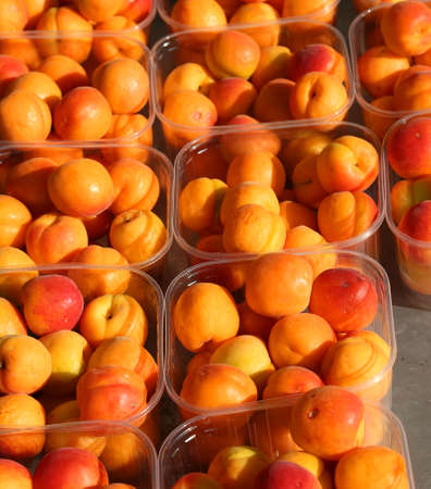 baskets full of orange apricots freshly picked from the trees for sale at the fruit and vegetable market Stock Photo