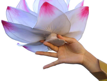 lotus flower supported by the hands of the dancer on white background