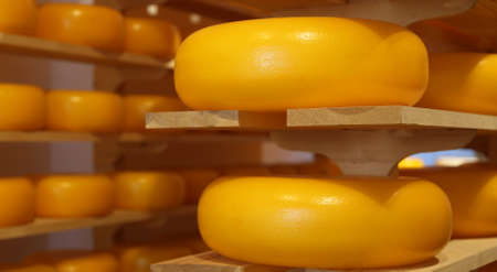 Yellow cheeses from Holland for sale in the Shop Stock Photo