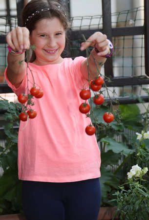 Pretty smiling little girl showing the harvest of fresh tomatoes