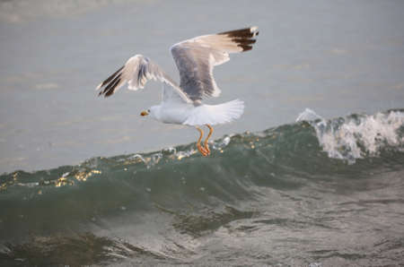 seagull flies free over the water of ocean