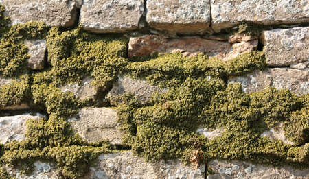 wall with a lot of moss and lichens due to the high humidity