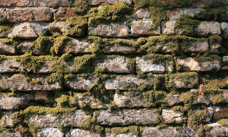 brick wall with a lot of moss and lichens due to the high humidity Фото со стока