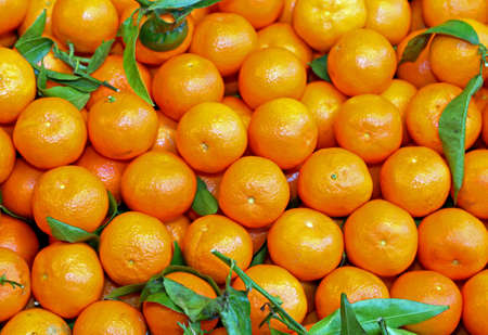 background of small orange mandarins from Sicily for sale in a fruit and vegetable shop