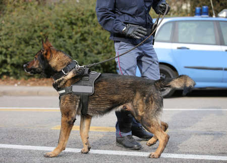 polcie dog and policeman on the street of city during check Banco de Imagens