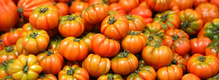 background of red ripe tomatoes just harvested