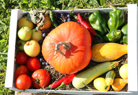 box with fruits and vegetables and a big orange pumpkin Stock Photo