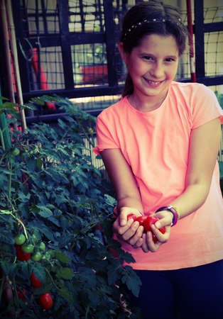Pretty smiling little girl collecting tomatoes from the plant with vintage effect