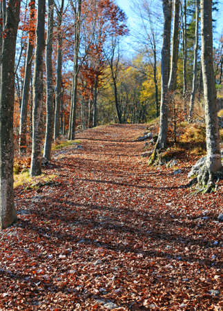 path in the woods with lots of fallen leaves in autums