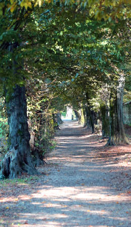 long tree-lined avenue of a public park with large trees in the autumn