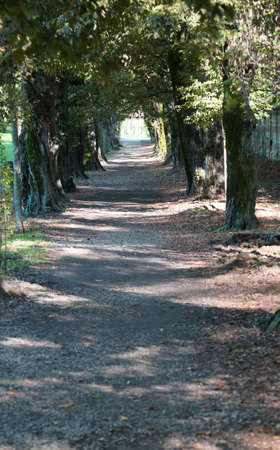 long avenue lined with trees in a city park