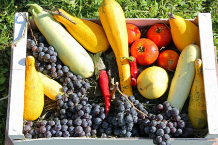 wooden box containing autumn fruits and vegetables including grapes and pumpkins
