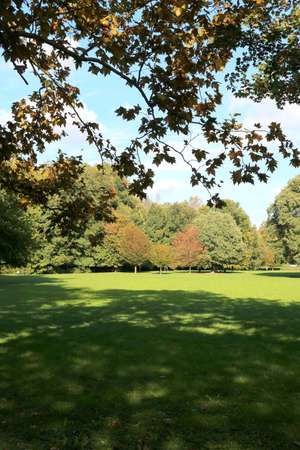 large lawn surrounded by trees in a city park