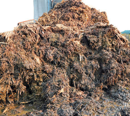 heap of smelly manure to spread on the field to make it very fertile Standard-Bild - 116362190