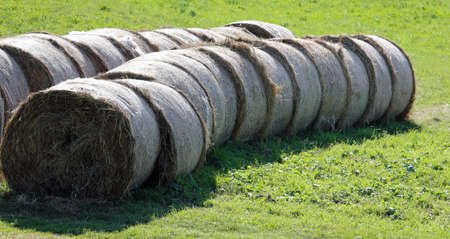many bales of hay rolled on the field