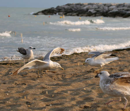 many seagulls with gray and white feathers fly over the beach by the sea