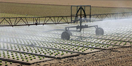automatic irrigation system in a large lettuce field Stock Photo
