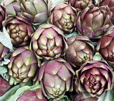 background of large green globe artichokes ready to be cooked for sale at the greengrocer's stall in Italy