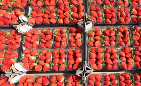 small boxes of ripe red freshly picked strawberries for sale at the fruit and vegetable market