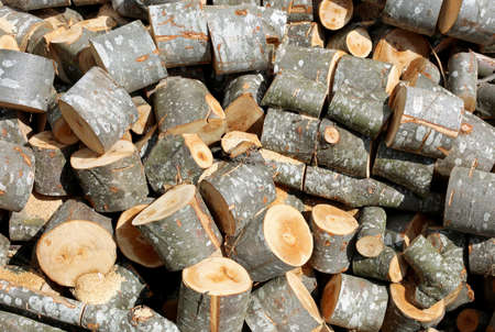 Pile of wooden logs and cutted trunks in the woodshed