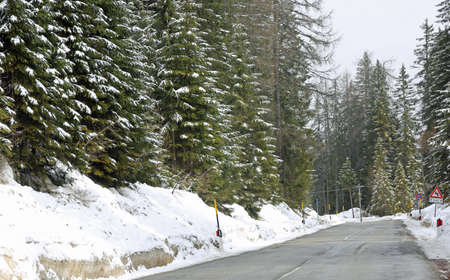 frozen road in mountain with firs pines and snow