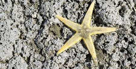 starfish with five-segment radial on the rock of the sea in summer