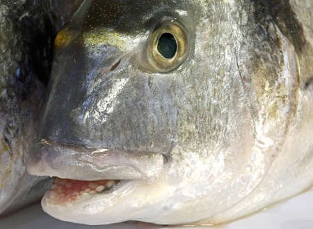 big bream with his mouth open just caught by the fisherman Stock fotó