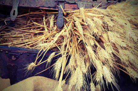 golden ears of ripe wheat in the coffer with old toned effect