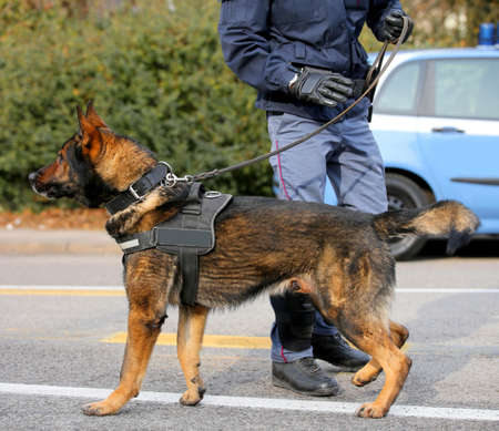 Dog Canine Unit of the police called K-9 to identify the explosives during an anti-terrorist operation
