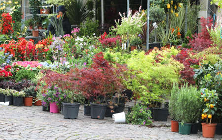 many potted plants at market on the street Banco de Imagens