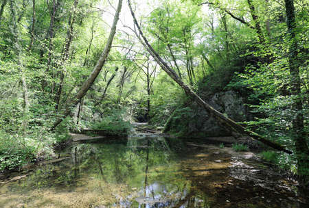 wild forest panorama with many lush trees and a small stream with clear water