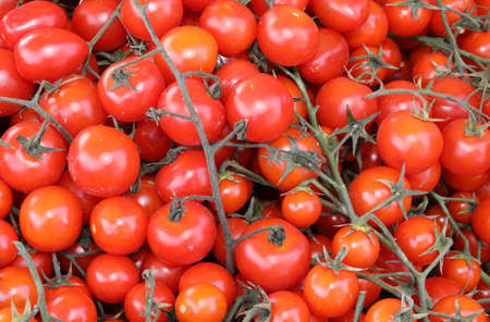 background of red ripe tomatoes just harvested in summer