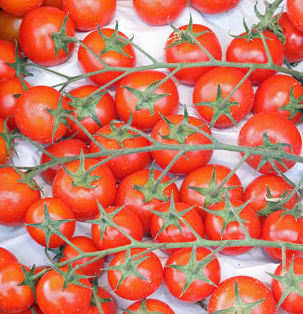 background of many red cherry tomatoes just harvested in summer Archivio Fotografico