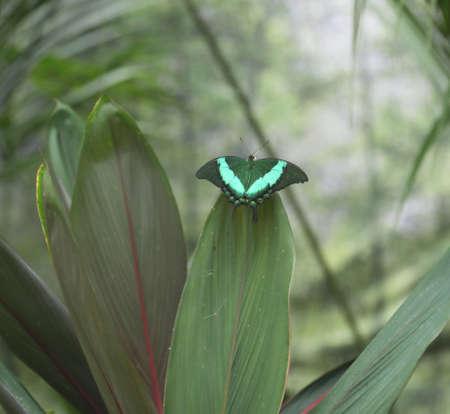 papillon aux ailes vertes se camoufle parmi les feuilles d'une plante pour échapper aux prédateurs