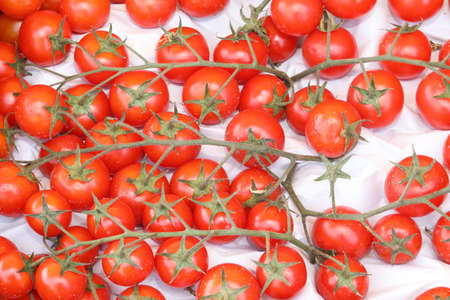 background of many red ripe tomatoes just harvested in summer