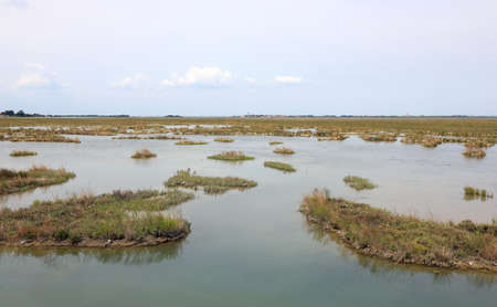 Wildness place called MESOLE in the Lagoon of Venice in Northern Italy in summer Фото со стока