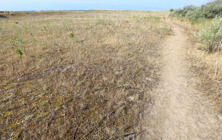 path in the maquis shrubland without people in summer Zdjęcie Seryjne