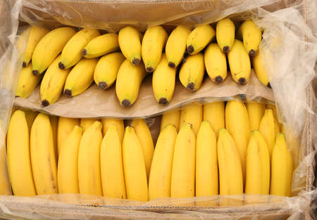 Yellow bananas on the box for sale at market