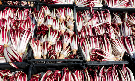 Red chicory also called Radicchio Tardivo in Italian language at vegetables market