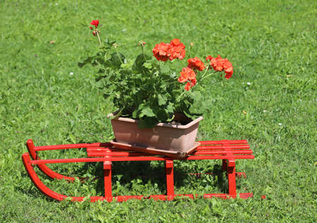 red sled with pot of geraniums on the meadow in summer