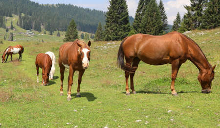 family of horses grazing in mountain at wild state